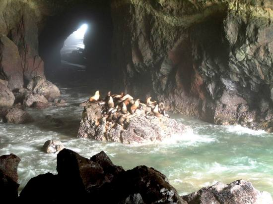 Oregon_Sea_Lion_Cave