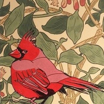 red_cardinal